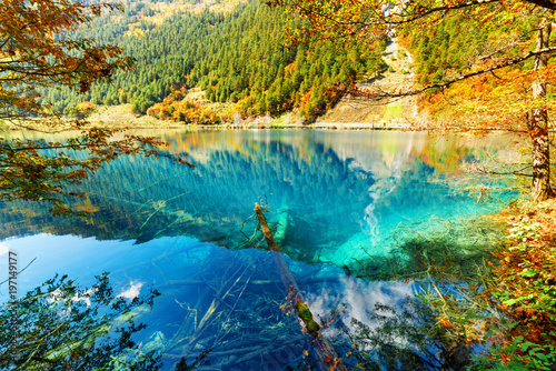 In de dag Honing Scenic view of lake with azure water among colorful fall woods
