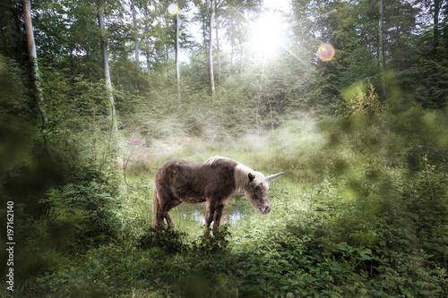 Fotobehang Paarden Das letzte kleine Einhorn steht in einer Lichtung, Lichtung