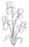 Iris flower graphic black white isolated bouquet sketch illustration vector - 197165713