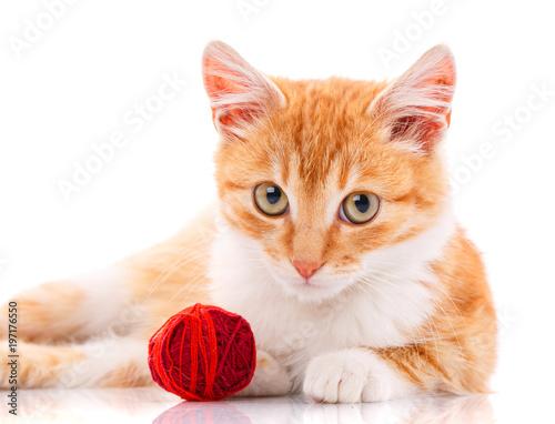 Cute orange kitten with white paws sitting next to a toy