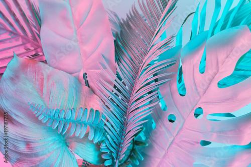 Pastelowe tropikalne liście palmowe