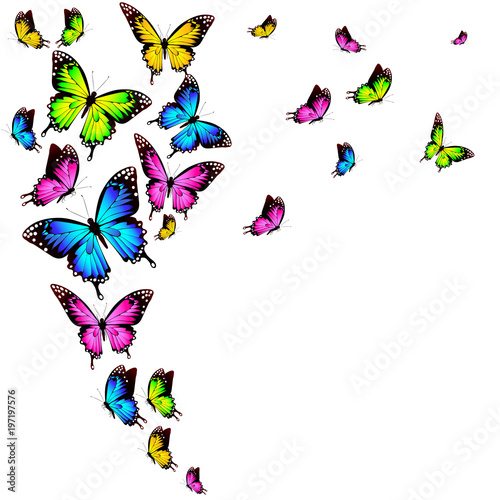 Naklejka beautiful color butterflies,set, isolated on a white