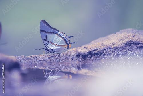 Odbijają się motyle jedzenia żywności na sól ziemi z delikatnie jasny fiolet niewyraźne tło