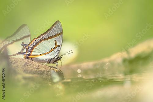 Odzwierciedlają motyle jedzenia żywności na sól ziemi z delikatnie jasnozielonym rozmytym tłem