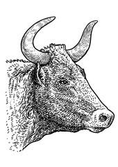 Bull head portrait illustration, drawing, engraving, ink, line art, vector