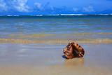 Sea shell on tropical beach. - 197208989