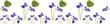 spring flowering violets