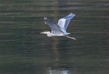 the egrets and the heron feed on the Eo estuary - 197217704
