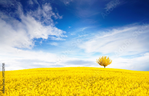 Fotobehang Oranje Stunning bright colorful landscape for wallpaper. Yellow field of flowering rape and tree against a blue sky with clouds. Natural landscape background with copy space.