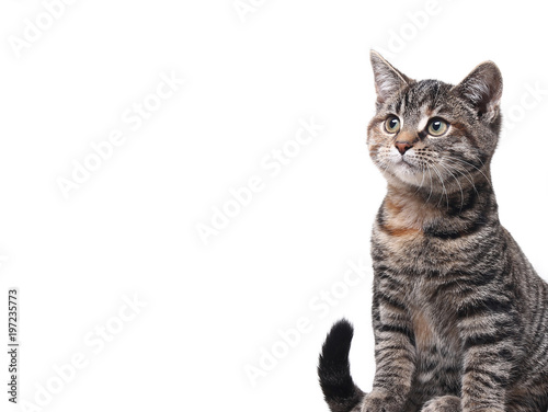 Fotobehang Kat Lovely cat