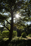 Baum im Gegenlicht - 197246587