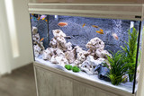 Aquarium with cichlids fish from lake malawi - 197251568
