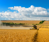 Combine Harvester Cutting Barley, endless Fields under blue sky with clouds - 197260174