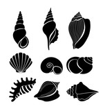 Vector illustration set of sea shells black silhouettes isolated on white background.