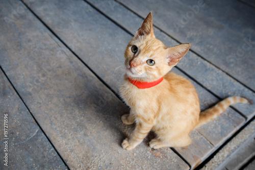 młody czerwony kot na drewniane tło patrząc - pomarańczowy kotek