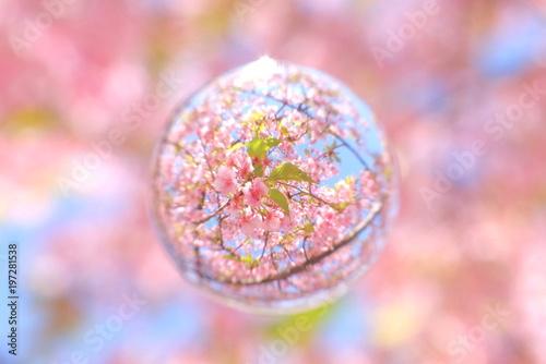 Foto op Plexiglas Lichtroze 河津桜 葉桜を閉じ込めて