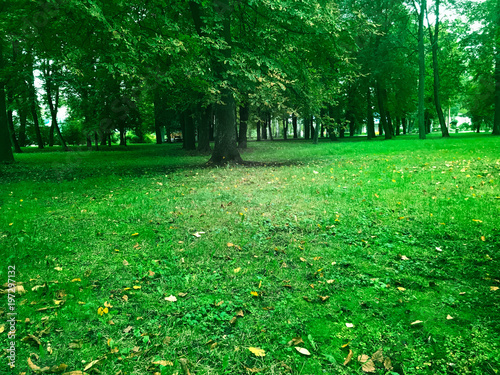 Foto op Plexiglas Groene Green meadow in the woods.