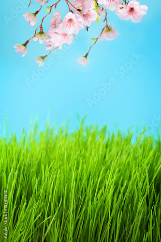 Foto op Plexiglas Pool meadow with green grass and cherry blossom flowers on blue sky background