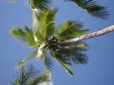 Palmier et ciel bleu - 197321970