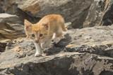 yellow haired kitten on rocks