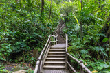 Wooden stairs ascending into the Costa Rican rainforest