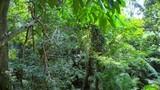 Rainforest vegetation nature background. Sumatra, Indonesia - 197325371