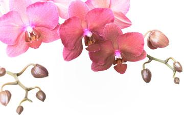 Magenta orchid branche. Retro toned.