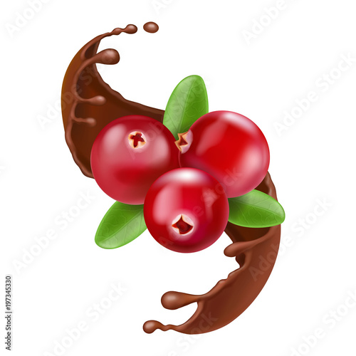 Red cranberry, splash of chocolate. Realistic forest berry illustration - 197345330