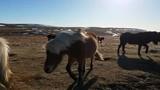 Brown Horse Among Herd - 197349702