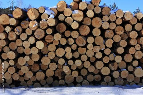 Foto op Aluminium Brandhout textuur Pine sawn logs