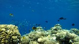 Ocean. Underwater life in the ocean. Colorful corals and fish. - 197358727