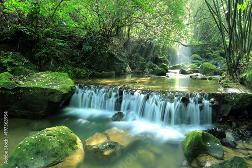 Scenic view of a cool refreshing waterfall hidden in a mysterious forest with sunlight shining through lush greenery and flowers fallen on mossy rocks ~ Beautiful river scenery of Taiwan in springtime - 197363954
