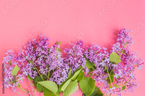 Lilac branches on a pink background - 197366799