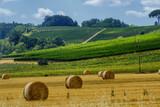 Summer landscape near Volterra, Tuscany - 197367563