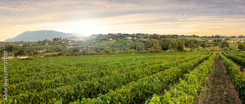 Deurstickers Wijngaard Vineyards in Provence in the South of France