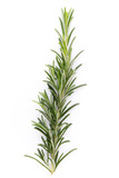 Rosemary spice on the white background. - 197389122