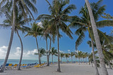 Palm Trees swaying in the wind againsta a blue sky above a row of beach chairs. - 197390956