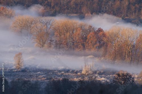 colori e brina mattutina in inverno - 197393713