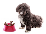 Little dog with food bowl and bones