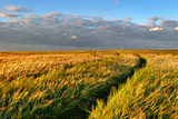 Field of Barley Swaying in the Wind, Warm Light of the Setting Sun, beautiful sky with clouds - 197452782