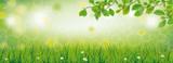 Spring Grass Beech Twigs Daisy Flowers Header - 197453770
