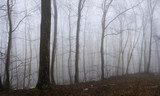 Panoramic view to the misty forest - 197458946