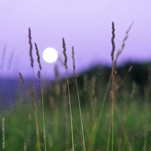 Foto op Plexiglas Purper Blurred full moon rising over Altai Mountains, Kazakhstan, seen through tall green grass on summer night