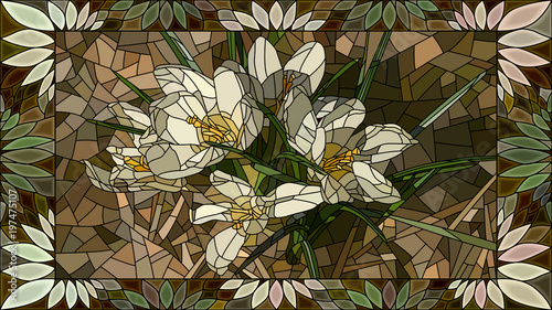 Ilustracji wektorowych kwiaty białych krokusów.