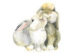Rabbits.  Сute сouple. Watercolor illustration.