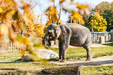 Elephants in wild nature in Africa. Danger huge animal in natural habitat in summer. Sunny day in autumn southern safari park. Beautiful mammal herbivore rest under sun light outdoor in savannah.