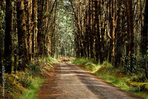 Fotobehang Weg in bos Ruta al paramo