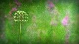 Animation of a dandelion growing and the seeds blowing away on the wind. Loop (or removable) section between 6:00-12:00. Green and pink version. Representing: wishing, birthday wishes, luck etc. - 197511109