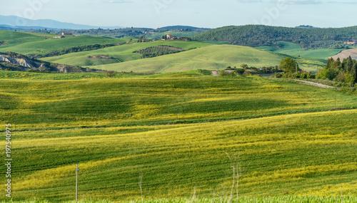 Fotobehang Pistache Meadows of Tuscany