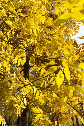 lush yellowed foliage